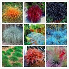 100 pcs mix Fescue Grass plants - (Festuca glauca) perennial hardy ornamental grass so easy to grow for home garden