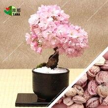 japanese sakura rare Japanese Pink flowers in indoor plant bonsai tree potted 10pcs/bag
