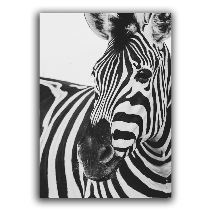 Scandinavian Black White Poster Nordic Canvas Wall Art Print Animal Zebra Painting Decorative Picture Neon Quotes Home Decor in Painting Calligraphy from Home Garden
