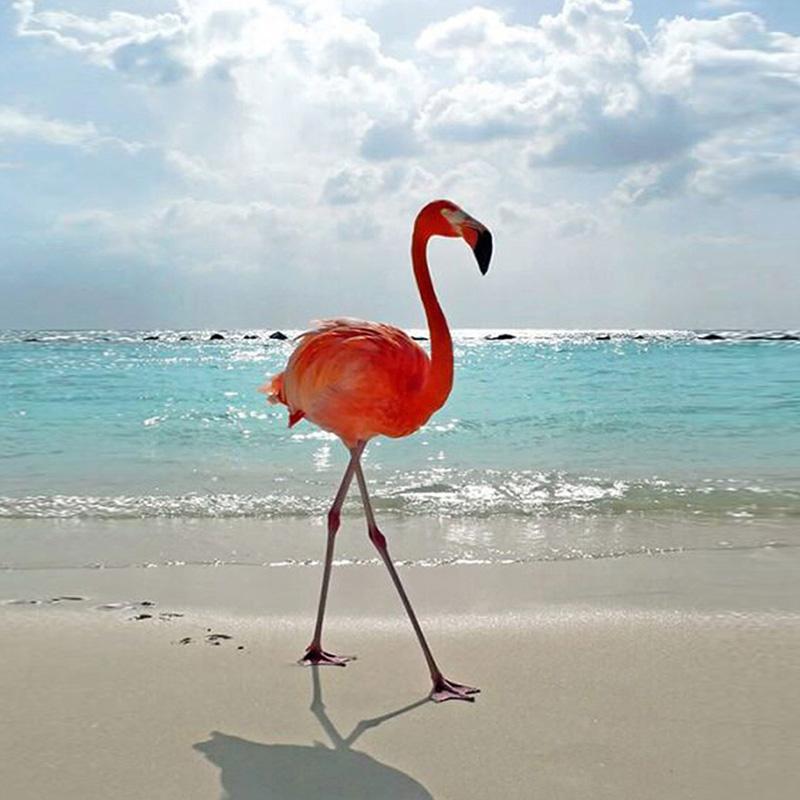 Urijk 3D Digitaldruck Flamingo Wasserdicht Haken Modelle Duschvorhang Für  Badezimmer Dusche Startseite Dekoration Polyester(China