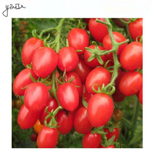 100pcs/lot tomato Fruit Bonsai Flower DIY Garden Pots Flowers Plants For Home Decorations Planting Planters Pot