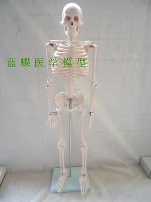 85 centimetri modello del corpo umano modello di Scheletro Neuromuscolare di partenza di scheletro piccolo ago coltello scheletro modello anatomico modello della colonna vertebrale85 centimetri modello del corpo umano modello di Scheletro Neuromuscolare di partenza di scheletro piccolo ago coltello scheletro modello anatomico modello della colonna vertebrale