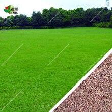 200pcs/bag zoysia grass seeds Beautiful outdoor plant DIY home garden