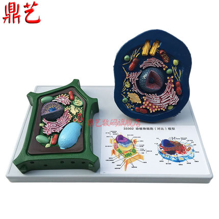 Biological Experimental Teaching Comparative Models Of Animal And Plant Cells Teaching Apparatus Free Shipping
