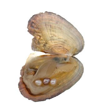 Freshwater oyster wish pearls pearls Mussel Shell Oyster Pearls Vacuum Pack Inside Pearl Mysterious Surprise brassiere