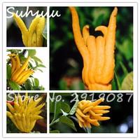 2017New-150PCS-bag-Bergamot-fingered-citron-seeds-Bergamot-semillas-Bonsai-For-home-garden-planting-easy-to.jpg_200x200