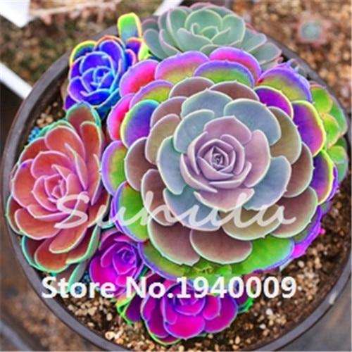 Bonsai Seeds Office Desk Mini Cactus Seeds Succulent Plant Radiation  Protection 200 Pcs