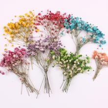 120pcs Pressed Dried Flower Gypsophila paniculata Filler For Epoxy Resin Jewelry Making Postcard Frame Phone Case Craft DIY