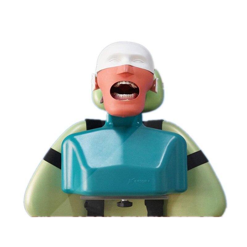 Dentaire Formation Mannequin Fantôme Tête avec Torse Dentaire Simulateurs D'hygiène Simulateur Dentisterie L'éducation Mannequin
