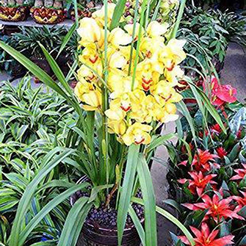 12 ชิ้น/ล็อตพลาสติก Florist Stub ลำต้นลวดดอกไม้งานแต่งงานเจ้าสาว Decor หัตถกรรม 60 เซนติเมตรขายร้อน