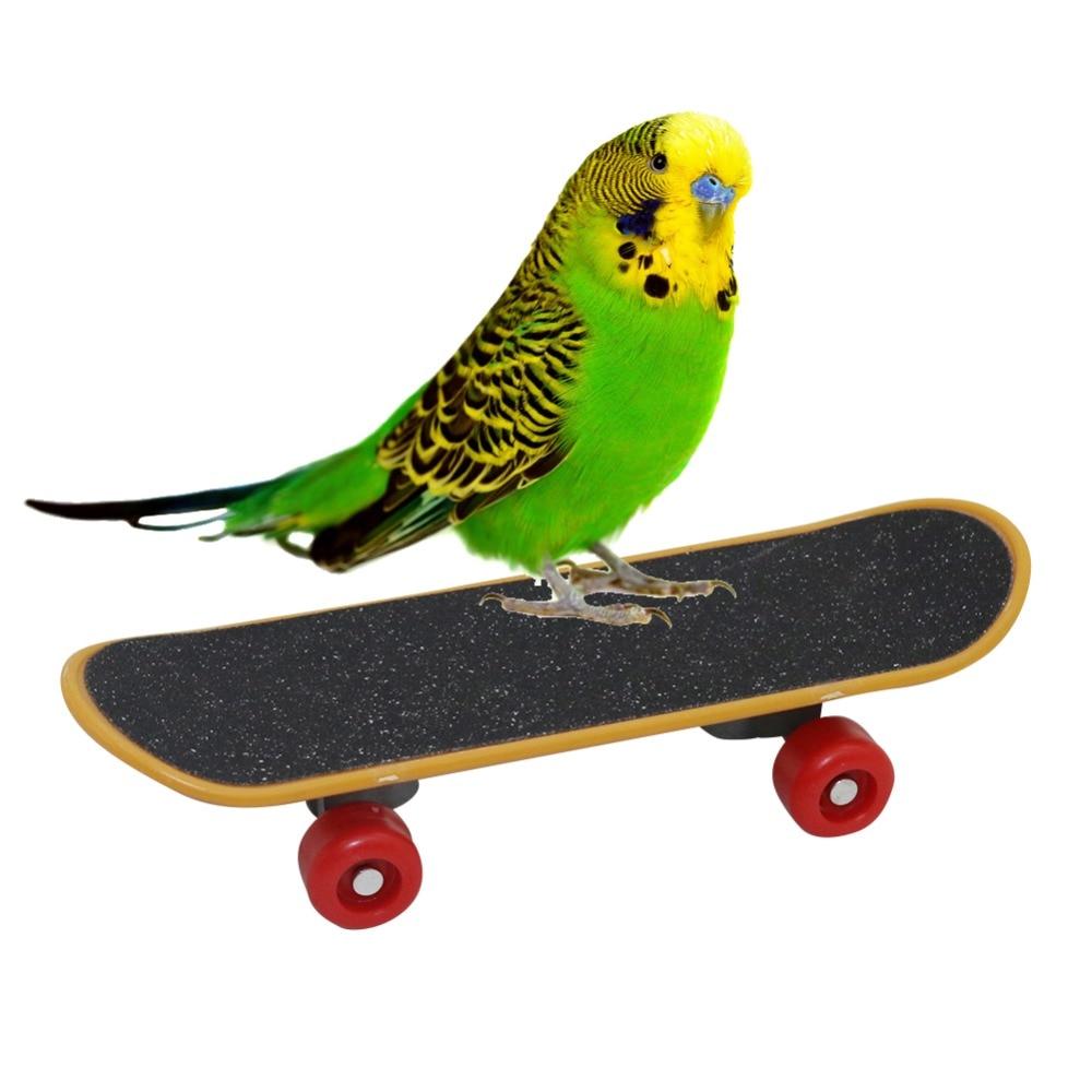 1 Pcs Pet Vogel Ausbildung Papagei Lustige Intelligenz Mini Skateboard Werkzeug Für Sittich Nymphensittiche Ausbildung Liefert