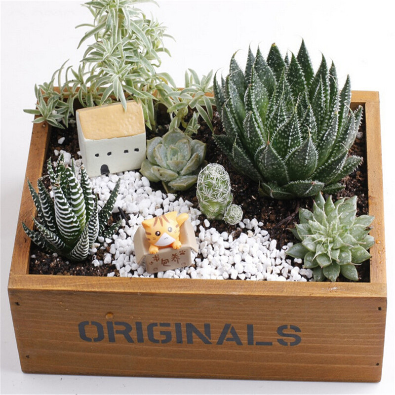 Personalized wooden storage box ornamental flower pot What are miniature plants grown in pots called