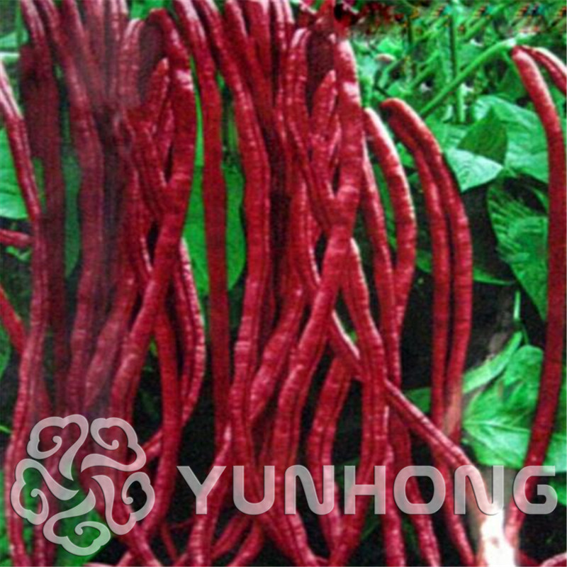 20 stk Kinesisk Red Noodle Bean Bonsai, Vigna Purplr Vigna sinensis, Dolichos sinensis, High Yield Plant, Delicious Vegetable