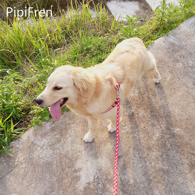 PipiFren Haiwan Peliharaan Anjing Leash Harness Belts Nylon Reflective Glowing Collar Labrador Big Dog Supplies Accessories Mascotas Coleira
