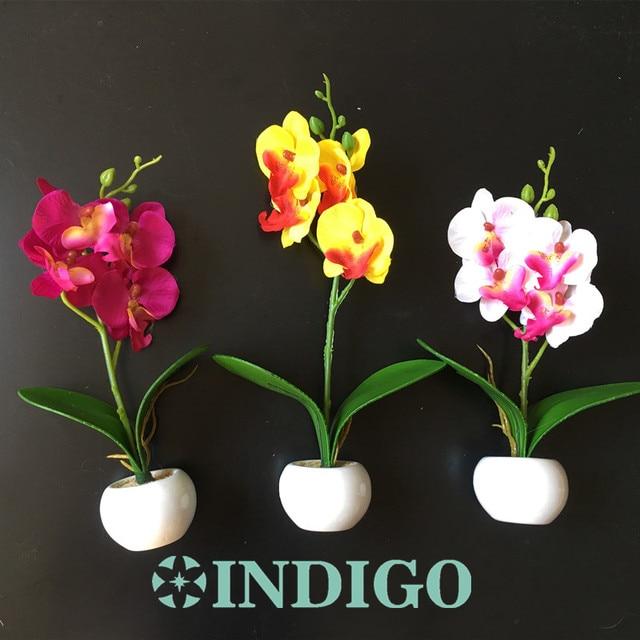 Orchids With Vase Small Size Desktop Orchids Bonsai Flower