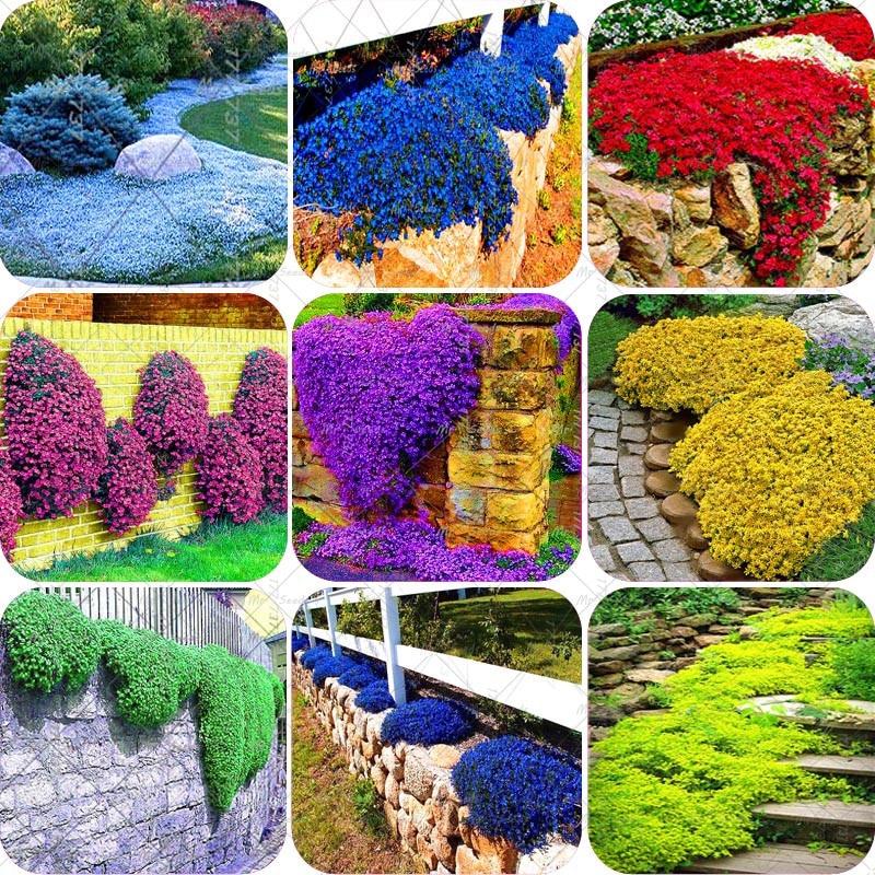 Online Get Cheap Ground Cover Perennials