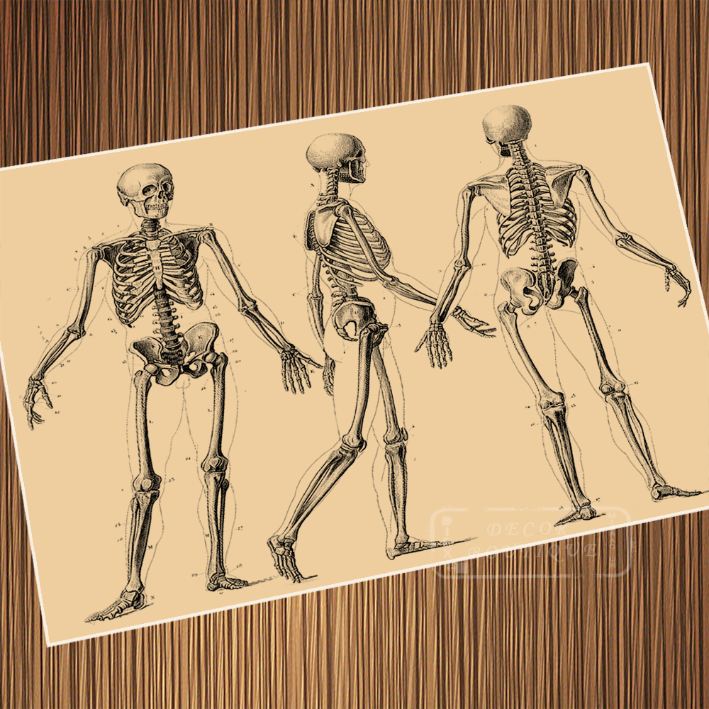 Vintage All Sides Of Human Bones Anatomical Drawings Poster Canvas