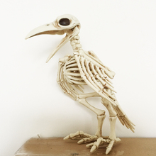 Skeleton Raven100% Plastic Animal Skeleton Bones for Horror Halloween Decoration