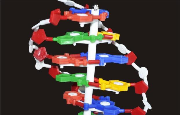 Estrutura Par Modelos de Dupla Hélice do