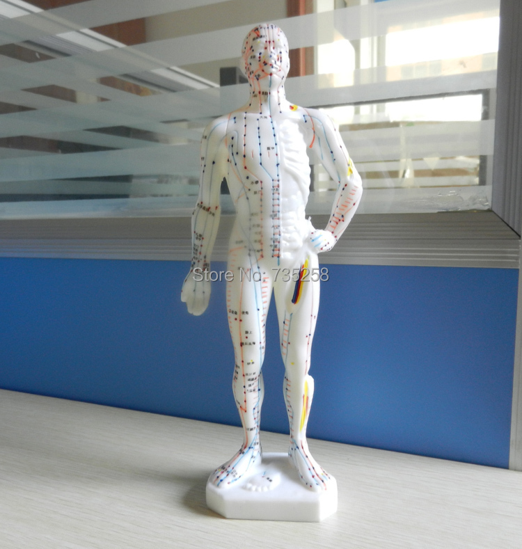 27 cm, the human body acupuncture point model ,The doctor of traditional Chinese medicine acupuncture model free shipping english medical female human body acupuncture point model 48cm
