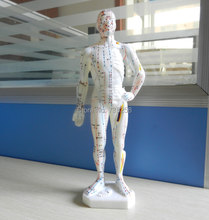 27 cm, the human body acupuncture point model ,The doctor of traditional Chinese medicine acupuncture model