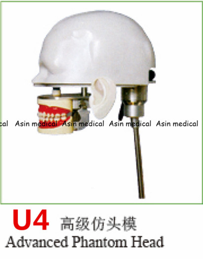 High Quality advanced phantom head Apply to dental simulation training of teeth scaling handpiece positioning taking impressions dental phantom head dental phantom phantom