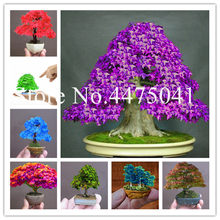 Rare Japanese Maple Tree, Indoor Rooms Mini Bonsai Flower Tree Plant Can Put On Office Desk Decoration Life Home Garden - 10 Pcs(China)