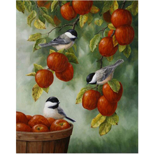 WEEN Bird and apple-DIY oil paint by numbers kit for kids, Hand-painted canvas painting kit, Acrylic Paint 40X50cm
