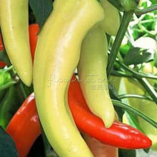 200 Pepper Sweet Banana Great Vegetable Seeds for home planting