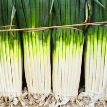 Sell Well 100 Pcs Giant Chinese Green Onion Home Garden Bonsai Plant Rare Sterilization Vegetable plant The Budding Rate 95%