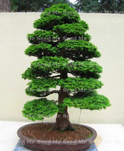 30pcs Outdoor Plant Juniper Bonsai Tree Purify the Air Absorb Harmful Gases Garden Decoration Plant Very Easy To Grow