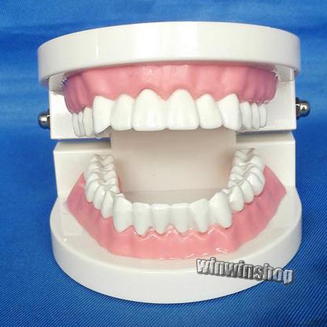 Dentes Dental modelo para crianças Dental ensino modelo de estudo Adult Standard Odontologia dentista equipamentos de laboratório