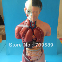 ISO 42CM Human Torso With Internal Organs 15 Parts Female Torso Anatomy Torso Model
