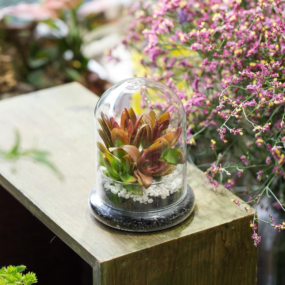 Display Glasdeckel Blume Cloche Jar Dome mit Holz Basis Mittelstücke Dekor