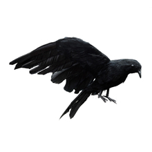 Halloween prop feathers Crow bird large 25x40cm spreading wings Black Crow toy model toy,Performance prop