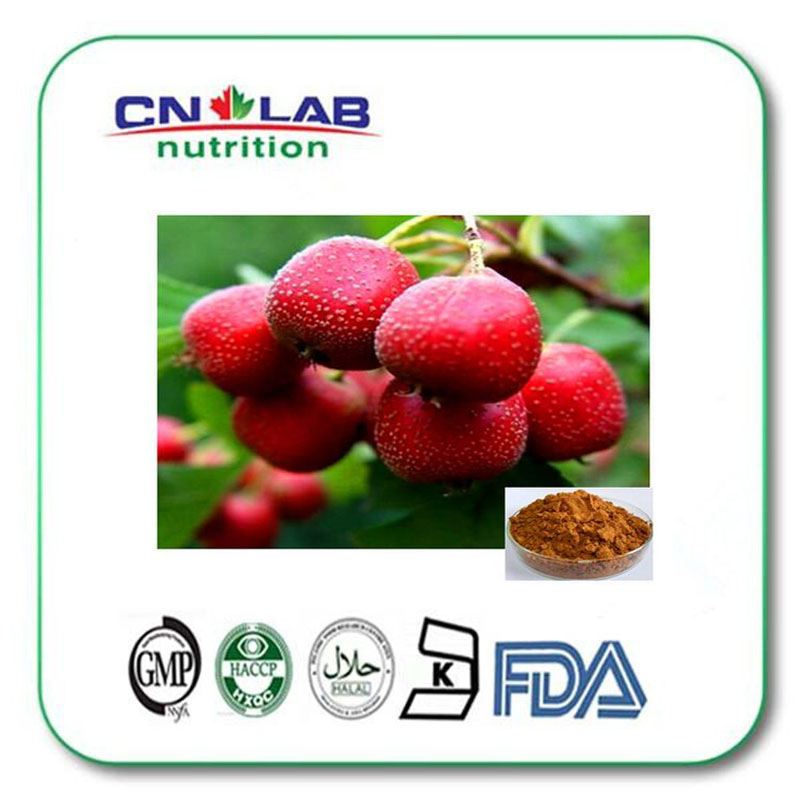 ФОТО Hawthorn Berry Extract powder for Healthcare Product Hawthorn Berry Extract 4:1 powder 1000g