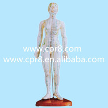BIX-Y1010 USA United States America Freight Free, Body Acupuncture 46CM, Human Body Acupuncture And Moxibustion Manikin Model