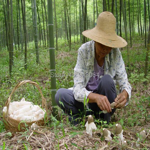 Envío libre 0.4 kg embalaje a granel Largo Neto Stinkhorn y Dictyophora Dictyophora Setas Secas, hongos comestibles, Hongo de bambú