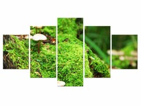 5 Pieces Mushroom Grass Leaf Natural Landscape Poster Fabric Poster Print Great Pictures On The Wall
