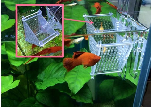 mini acrylic fish water flea feeder red worm holder for aquarium