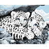 Urijk Two Leopards Oil Painting By Numbers Canvas Paintings On The Wall DIY Modular Pictures Without