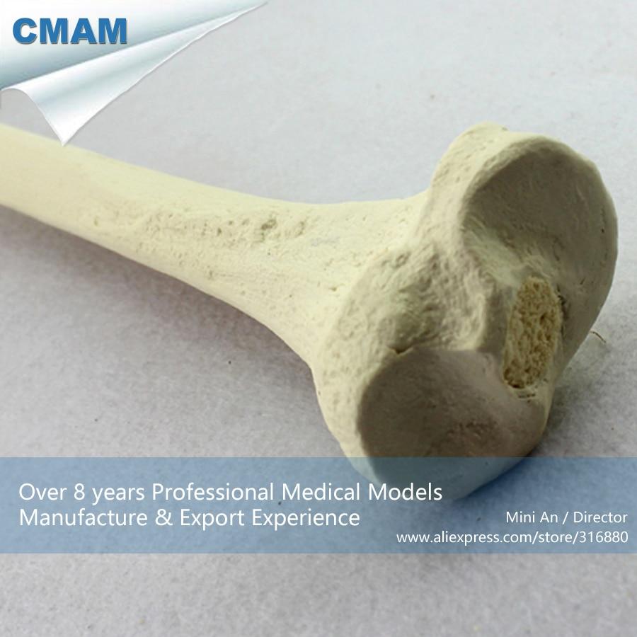 CMAM-TF08 Synthetic Bones - Tibia (Right or Left),SWABone Models  / Skeleton of Lower Limb / Tibia
