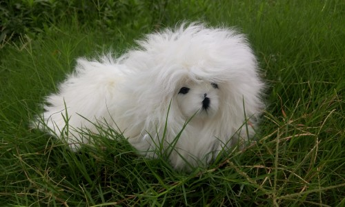 new simulation white dog polyethylene & furs lying poodle doll gift about 29x19x25cm 256 new simulation sleeping dog plastic&fur black&white dog model gift about 36x25x14cm a81