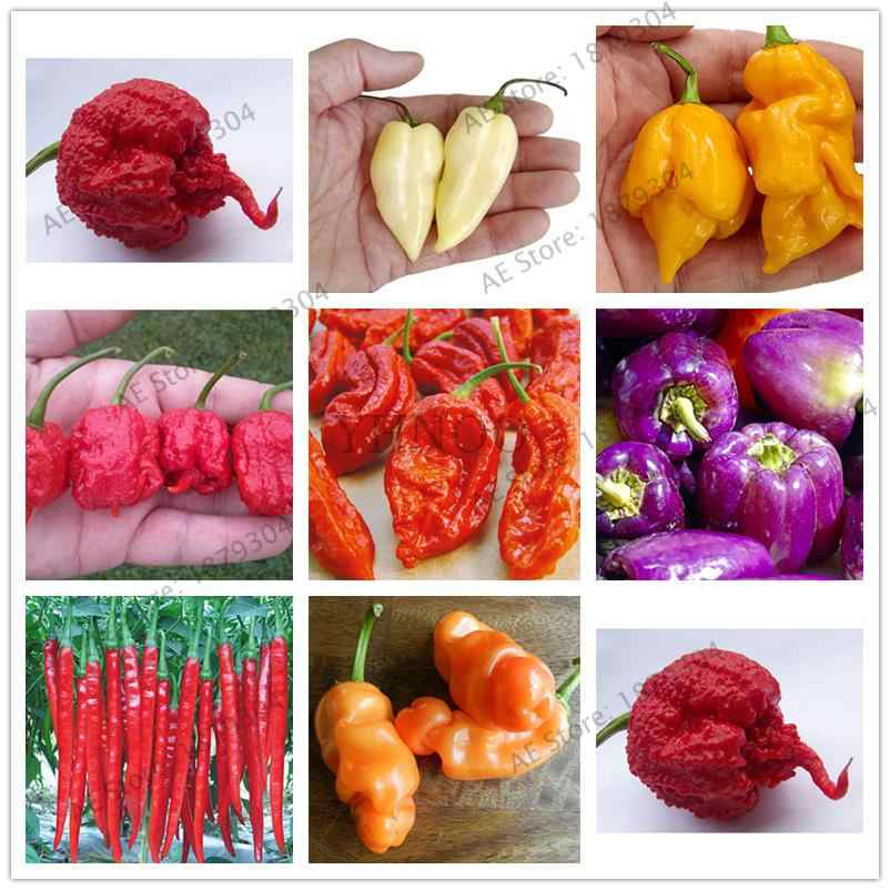 200 Pcs Hot Chili Seedsplants Carolina Reaper Organik Bonsai Sayuran Rainbow Bell Ghost Bonsai Taman Rumah Mudah Tumbuh