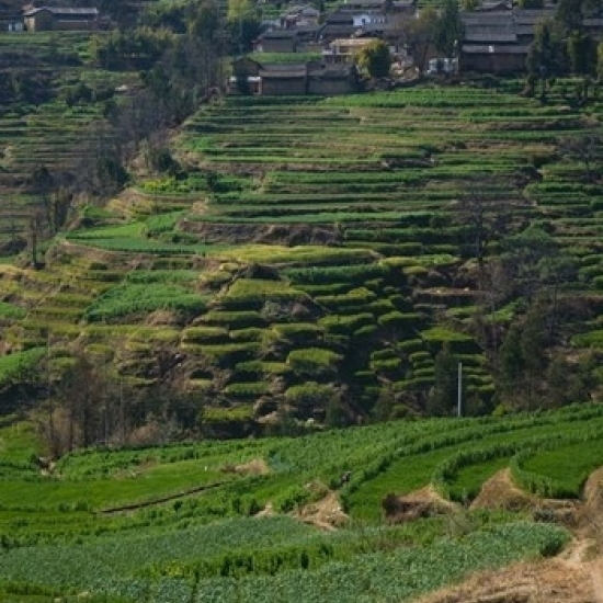 Houses with terraced fields at mountainside  Heqing  Yunnan Province  China Poster Print by Panoramic Images (24 x 36)