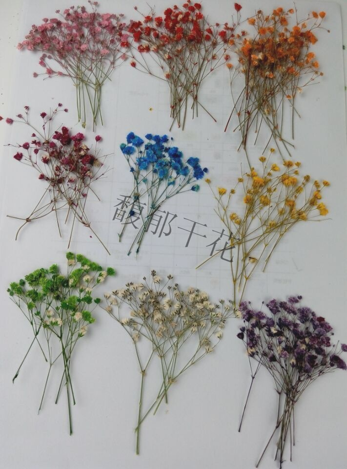 Free shipping Pressed flower 1000pcs Color dye absorption