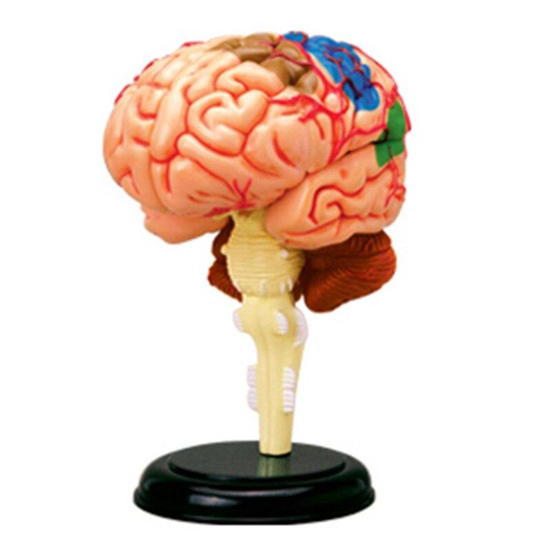 4D Human Head Brain Nerve Organs Assembling Master Puzzle Toys Medical Teaching Model Manikin Science Anatomical Model