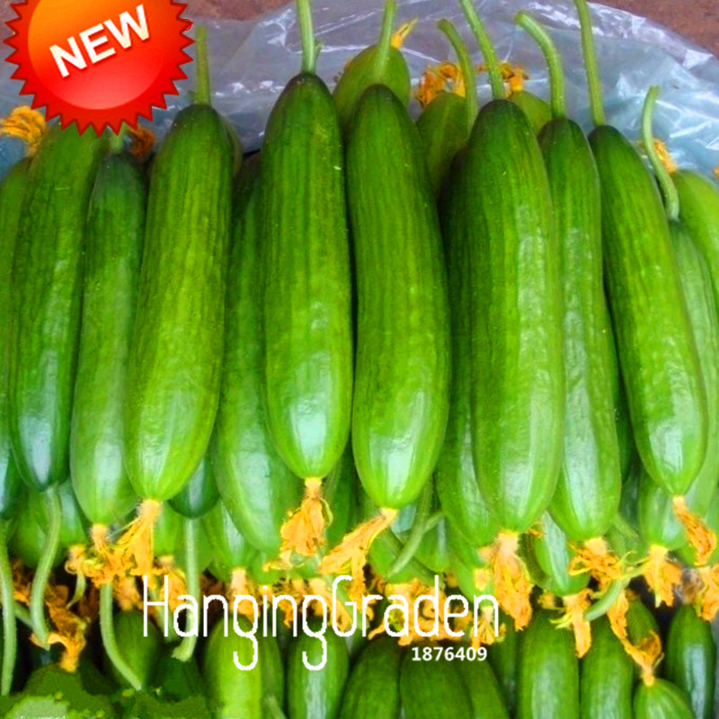 Time Limit!!Dutch Cucumber,Cucumber Seeds Fruits and Vegetable Seed 50 Particles / Pack,#59V4H5 ...