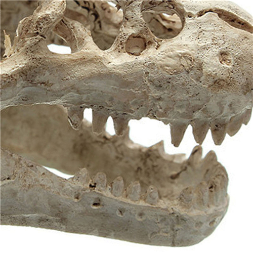 Novelty Crocodile Skull Resin Decor For Aquarium Terrarium Fish Tank