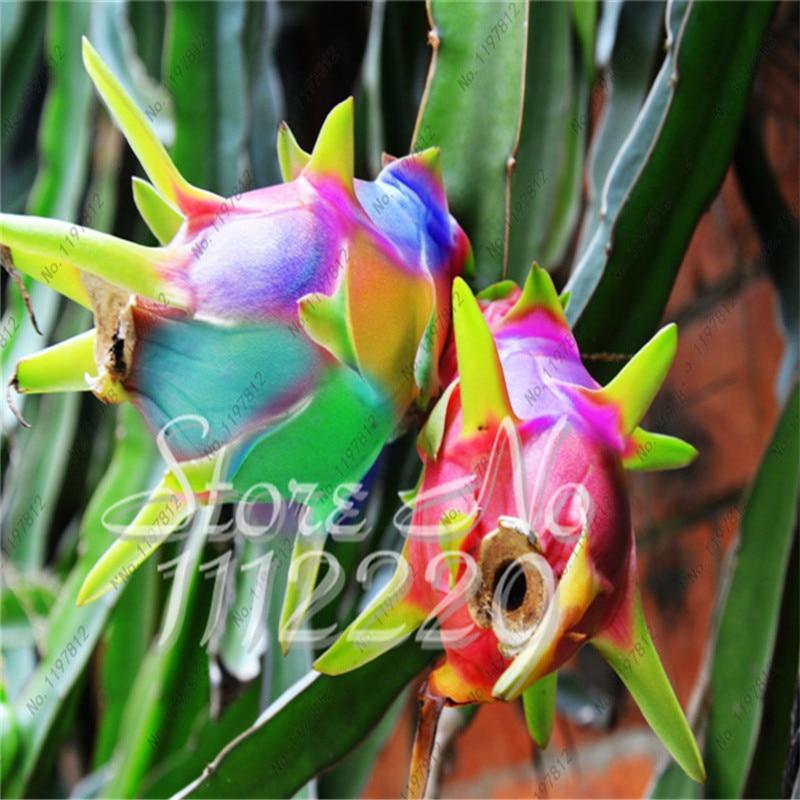 Fruit du dragon plantes promotion achetez des fruit du dragon plantes promotionnels sur - Arbre fruit du dragon ...